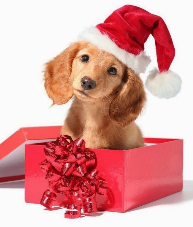 imagen-de-perrito-navideno-saliendo-de-una-caja-de-regalo