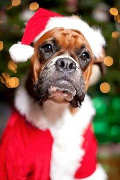 imagen-de-perro-con-gorro-navideno-para-compartir