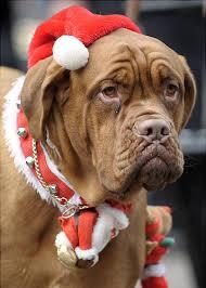 imagen-de-perro-con-gorro-rojo-navideno-para-whatsapp