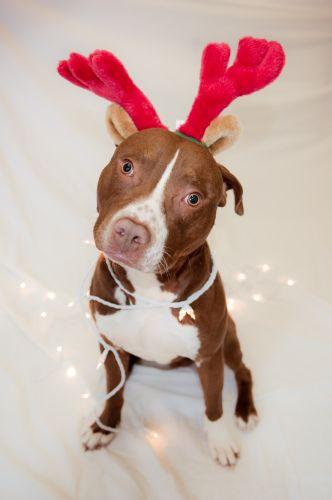 imagen-de-un-perrito-disfrazado-de-reno-navideno
