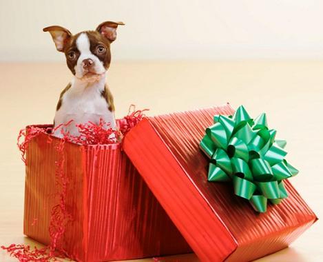 imagen-de-un-perro-saliendo-de-un-regalo-de-navidad
