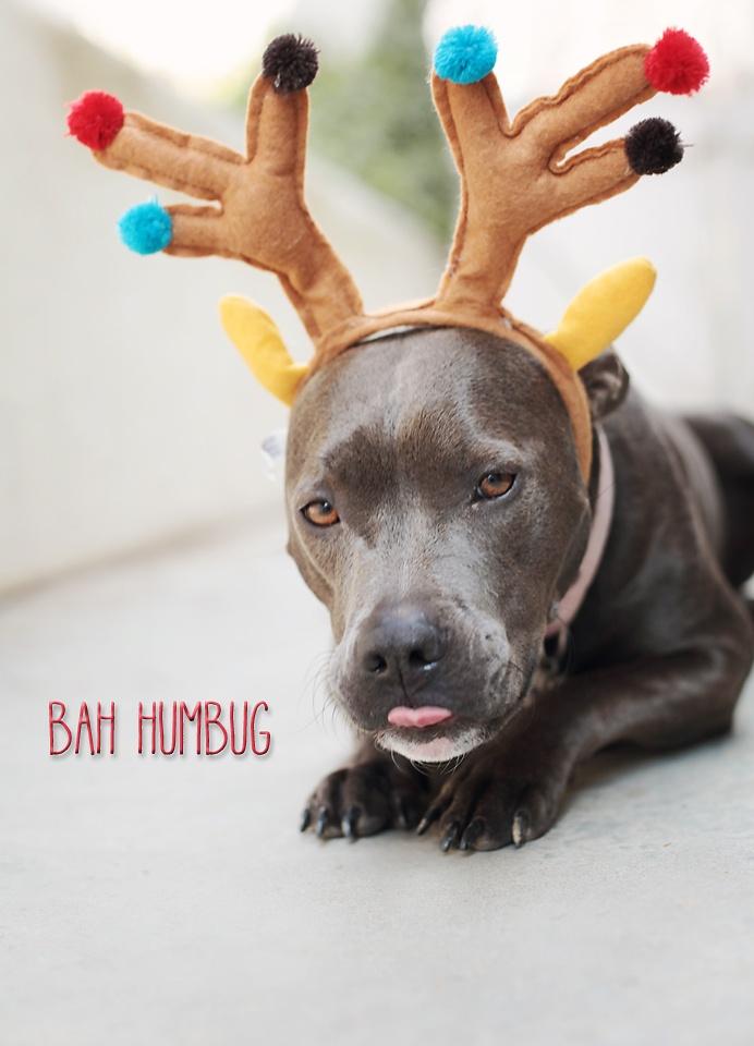 imagen-navidena-de-un-perrito-disfrazado-de-reno