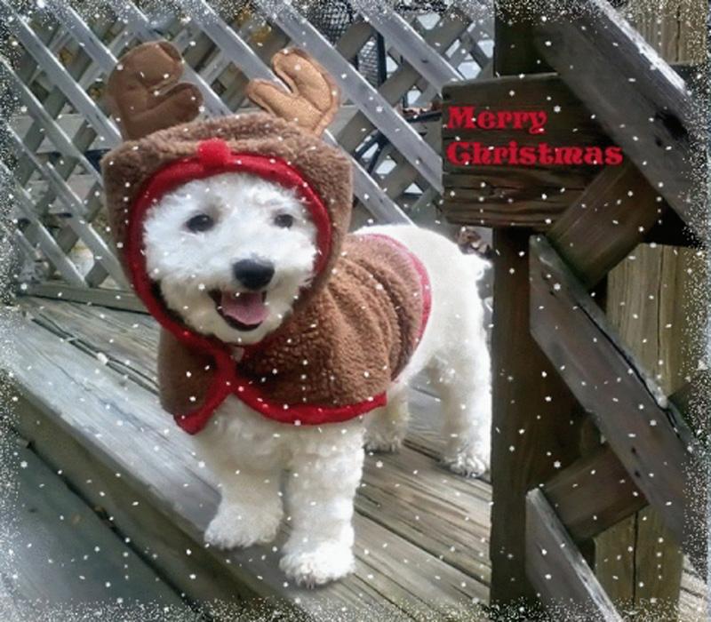 imagenes-de-perros-disfrazados-de-renos-navidenos