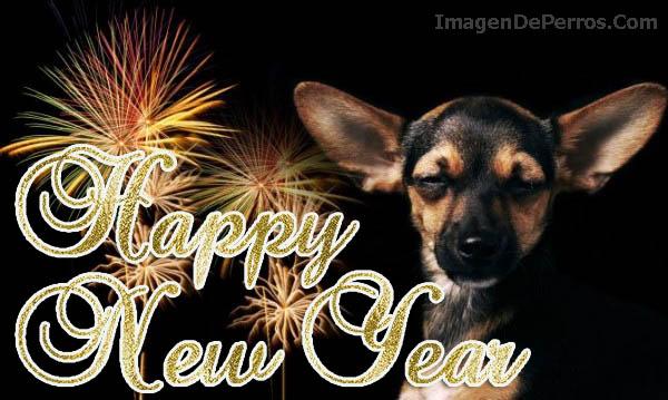 imagenes-de-perros-happy-new-year