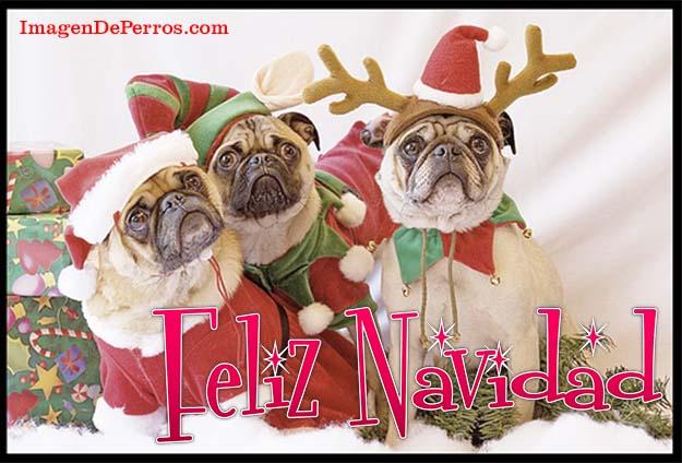 imagenes-feliz-navidad-con-perritos