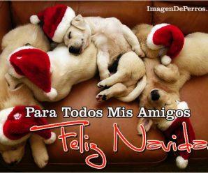 Imagenes De Perros Feliz Navidad