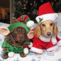 Imagenes Tiernas De perritos Para Navidad