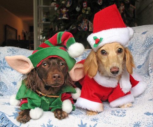 imagenes-tiernas-de-perritos-para-navidad