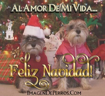 imagenes-con-perritos-feliz-navidad-para-mi-amor