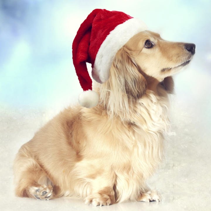 imagenes-de-perros-con-gorro-de-navidad-rojo