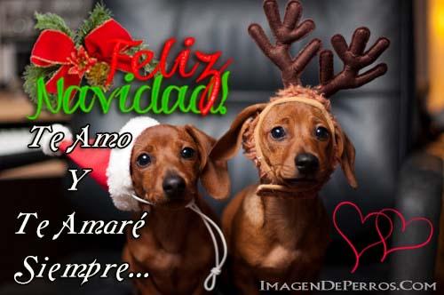 imagenes-de-perritos-feliz-navidad-de-amor
