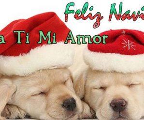 Imagenes De Perritos Con Mensajes De Navidad Para Mi Amor