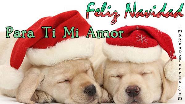 imagenes-de-perritos-con-mensaje-de-navidad-para-mi-novia