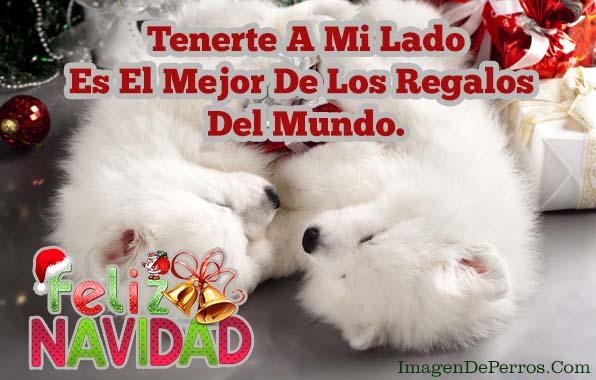 imagenes-de-perros-feliz-navidad-con-mensajes-para-mi-amor