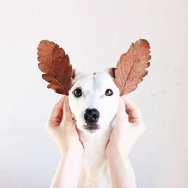 imagenes-tiernas-de-perritos-navidenos-para-compartir