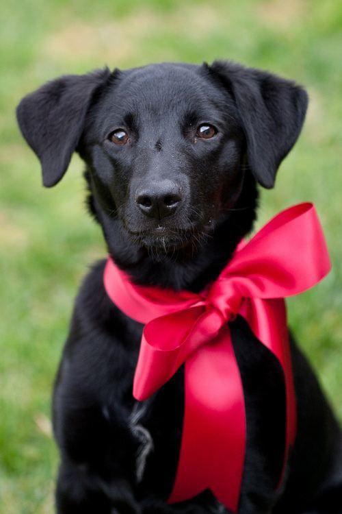 lindo-perro-negro-navideno-para-fondo-de-celular