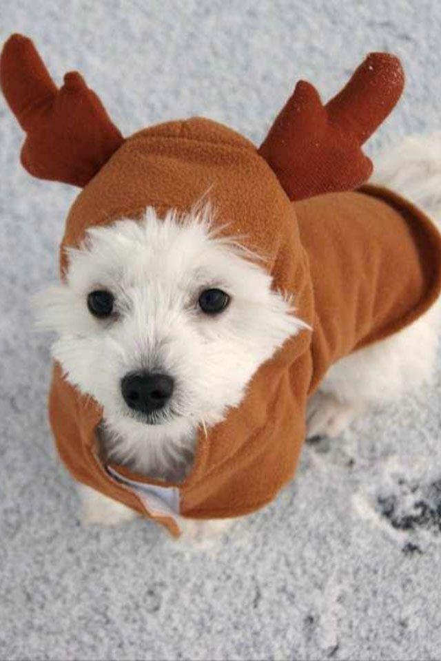 perrito-con-disfraz-de-reno-de-navidad