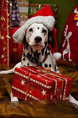 perro-en-navidad-para-fondo-de-pantalla-de-celular