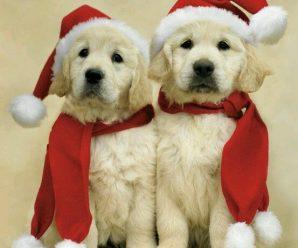 Imagenes de Perros Con Gorro De Navidad Rojo