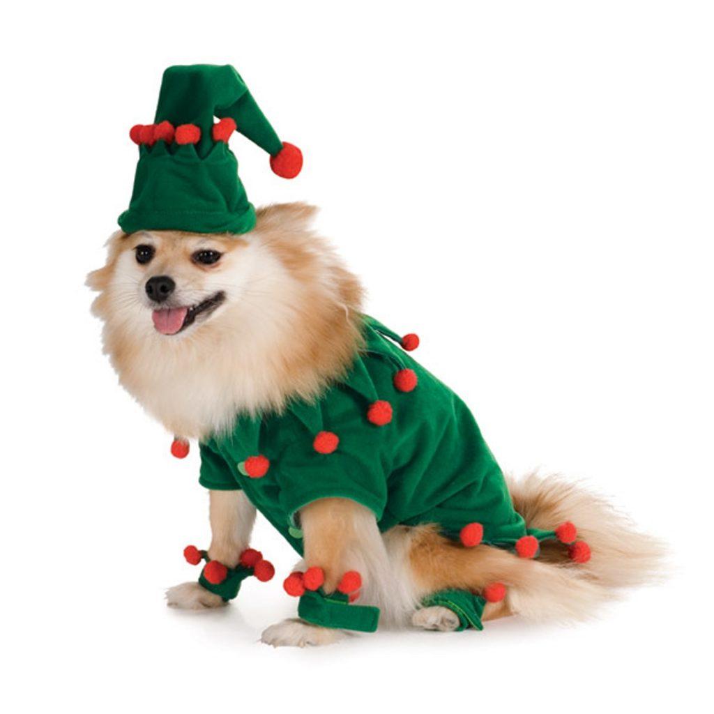 tierno-perrito-disfrazado-de-duende-navidenos-para-compartir