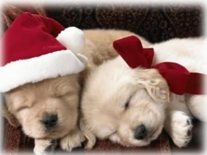 tiernos-perritos-para-navidad