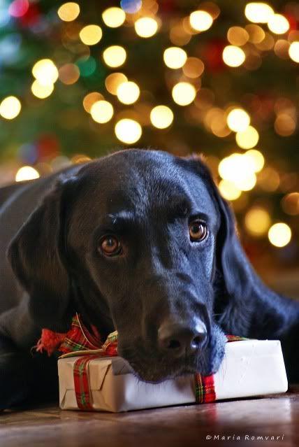 imagen de un perro negro en navidad para el fondo de mi celular