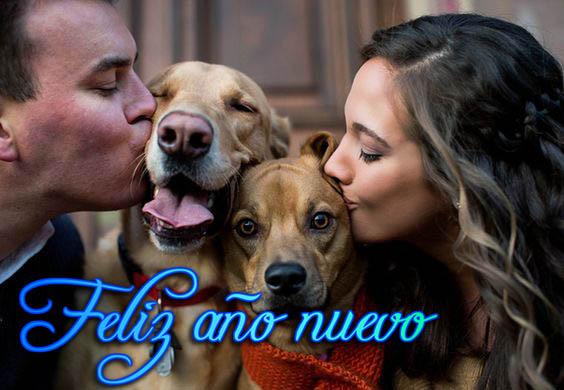 Feliz año nuevo en imagenes de parejas con perros