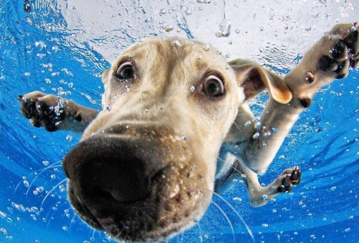 Bonitas imagenes de perros dentro del agua