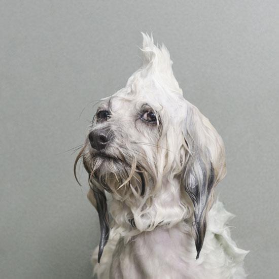 Foto de perrito mojado en el baño