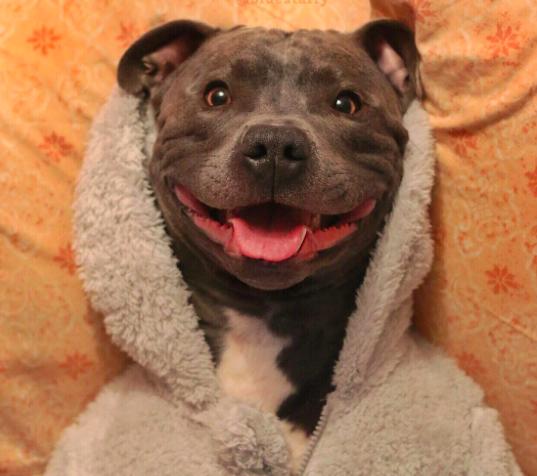 Fotos De Perros Muy Graciosas