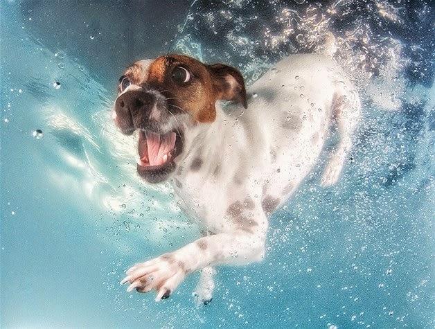 Fotos de perros nadando dentro del agua