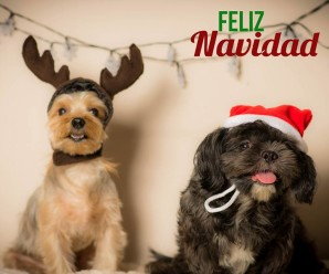 Imagen Bonita De Perros Feliz Navidad