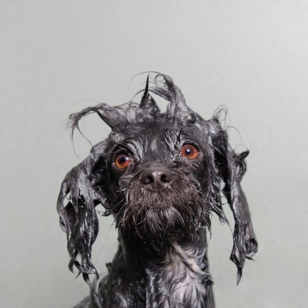 Imagenes Chistosas DE Perros bañandose