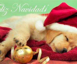 Imagenes Feliz Navidad Con Cachorros