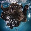Top 10 Imagenes De Perros Bajo El Agua