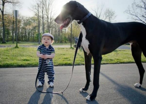 imagenes de los perros mas grandes