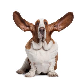 imagenes de perritos orejones