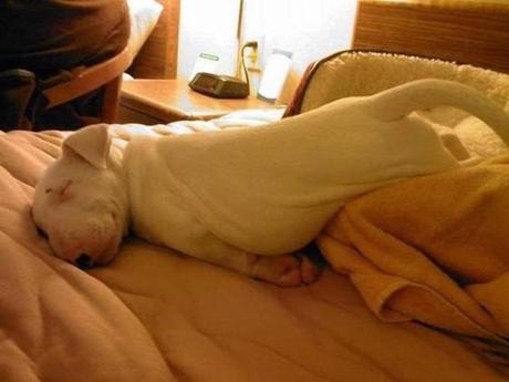 perro durmiendo en postura chistosa