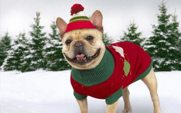 perro navideño