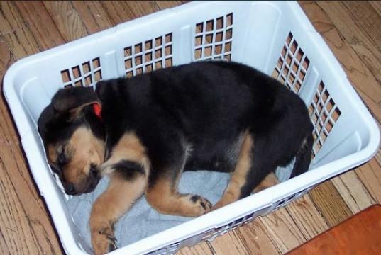 perros durmiendo en lugares incomodos