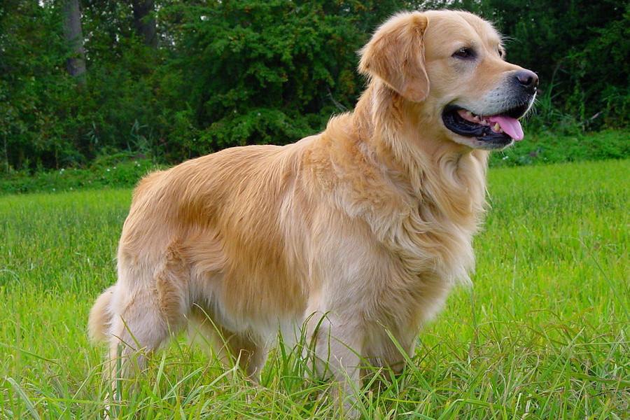 Bonitas fotos de perros para fondo de tu computador