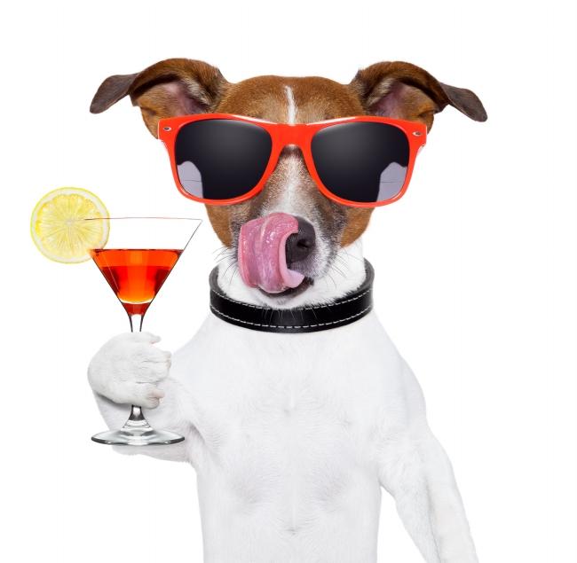 Brindis de año nuevo en imagenes de perros
