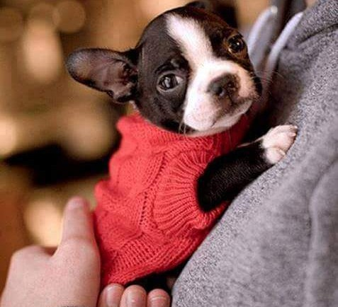 Cachorrito tierno usando saquito