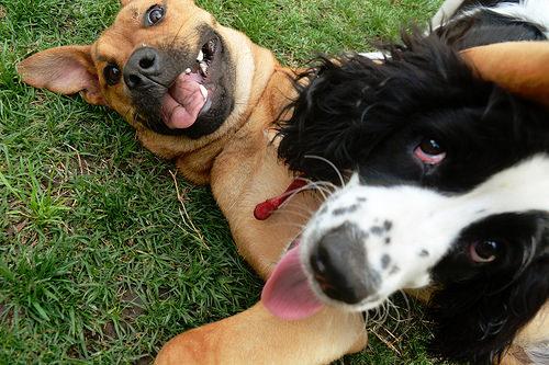 Divertida selfie de perros amigos