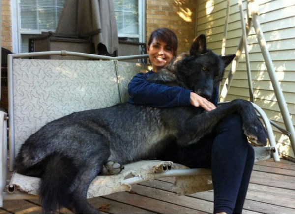 Foto de un lindo perro enorme y su dueña