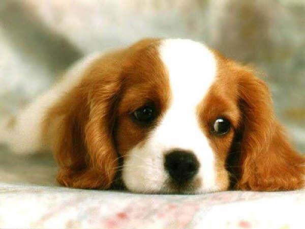 Foto tierna de un perrito