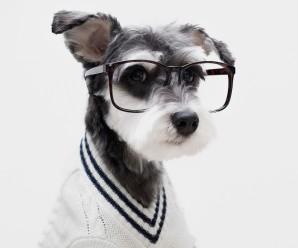 Fotos Blanco Y Negro De Perros Usando Gafas