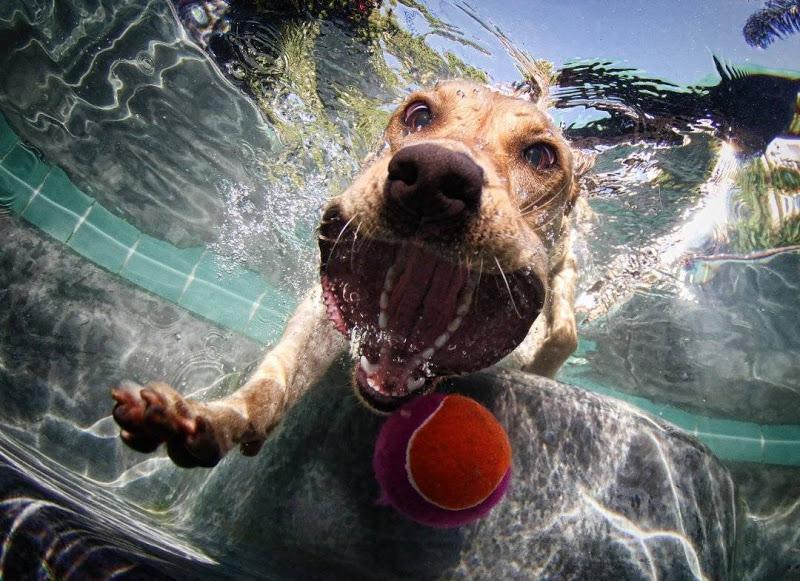 Fotos Espectaculares De Perros Atrapando Una Pelota Bajo El Agua