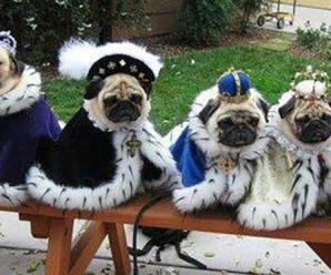 Fotos Graciosas De Perros Vestidos De Reyes Magos