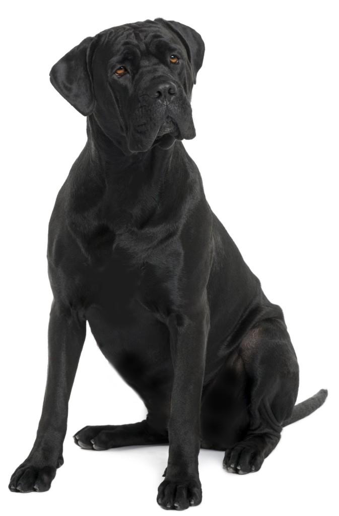 Fotos bonitas de perros grandes y negros